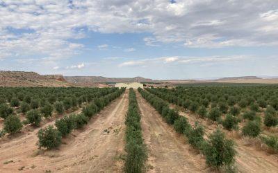 Proyecto Vida: Predicción de la disponibilidad hídrica en una explotación agrícola