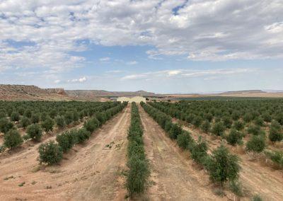 Proyecto VIDA: Explotación avanzada de datos usando técnicas de inteligencia artificial en la explotación agrícola El Forado